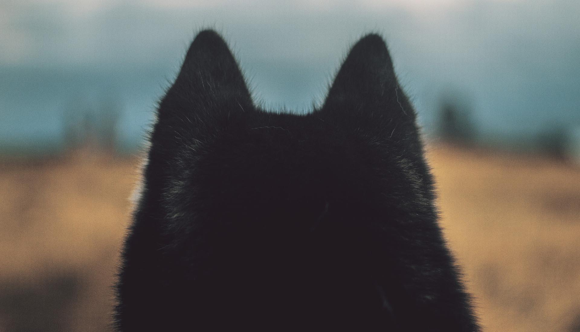 de_witte_wolf_slider